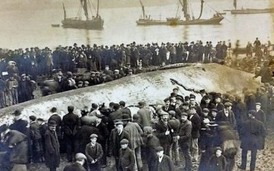 Forgotten Stories: Whale meat again…