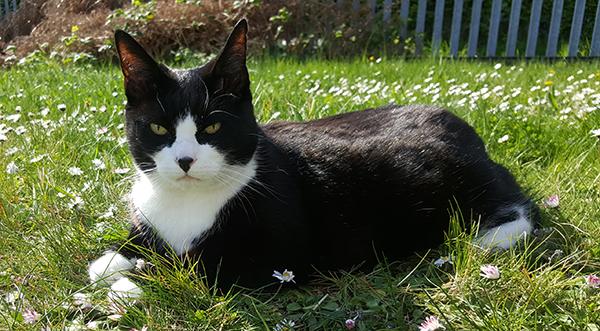 LRD Felix the cat